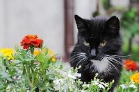Fotografia przyrody: czarny kot i kwiatki