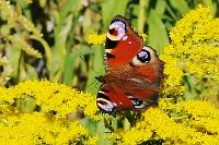 Fotografia przyrody: motyl